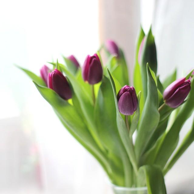 bezaubernde nana, fashionblog, germany, instagram, blumen, frühling, lila tulpen