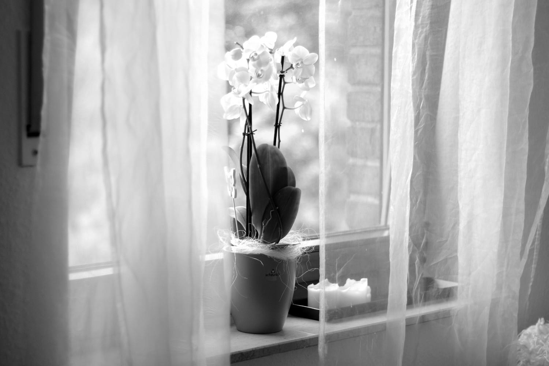 Bezaubernde Nana, bezauberndenana.de, Monatsrückblick, Favoriten Juli 2016, Deko, Einrichtung, Interior, weiße Orchidee