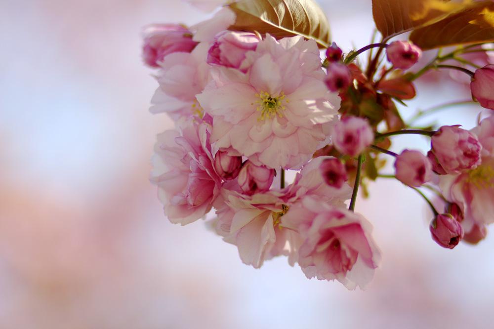 Get Ready For Spring – Bereit für den Frühling?