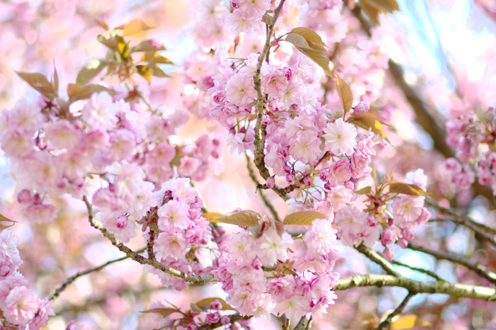 Get Ready For Spring, Tipps für den Frühling, bezauberndenana.de