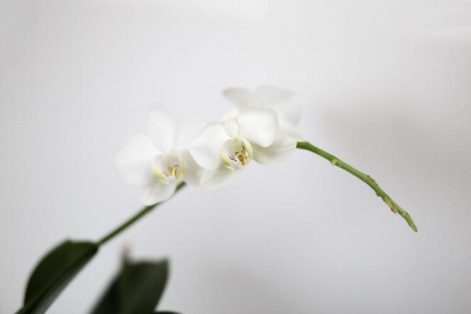 Januar Monatsrückblick, weiße Orchidee, bezaubernenana.de