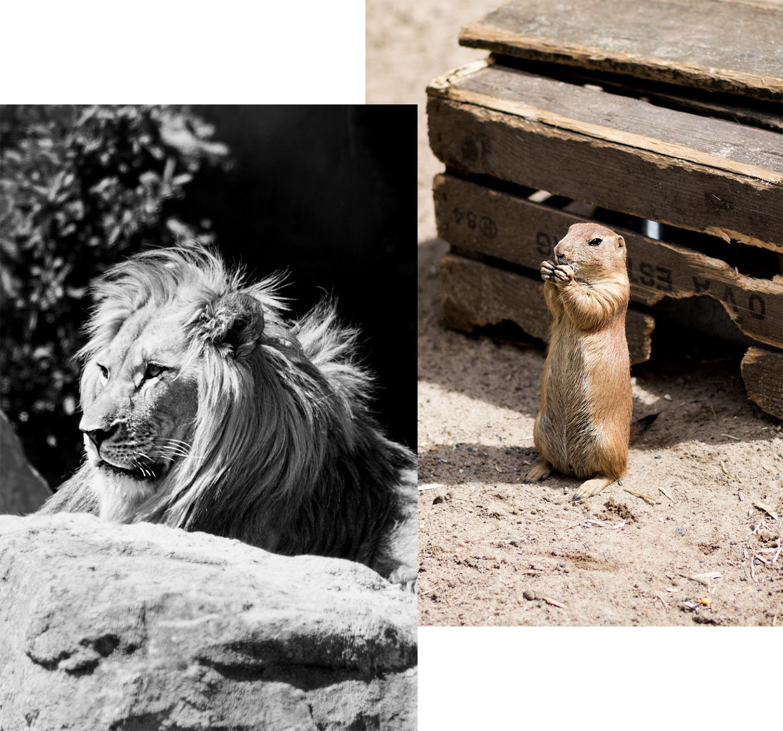 juli-favoriten-2017-monatsrückblick-zoo-hannover-fotografie-bezauberndenana