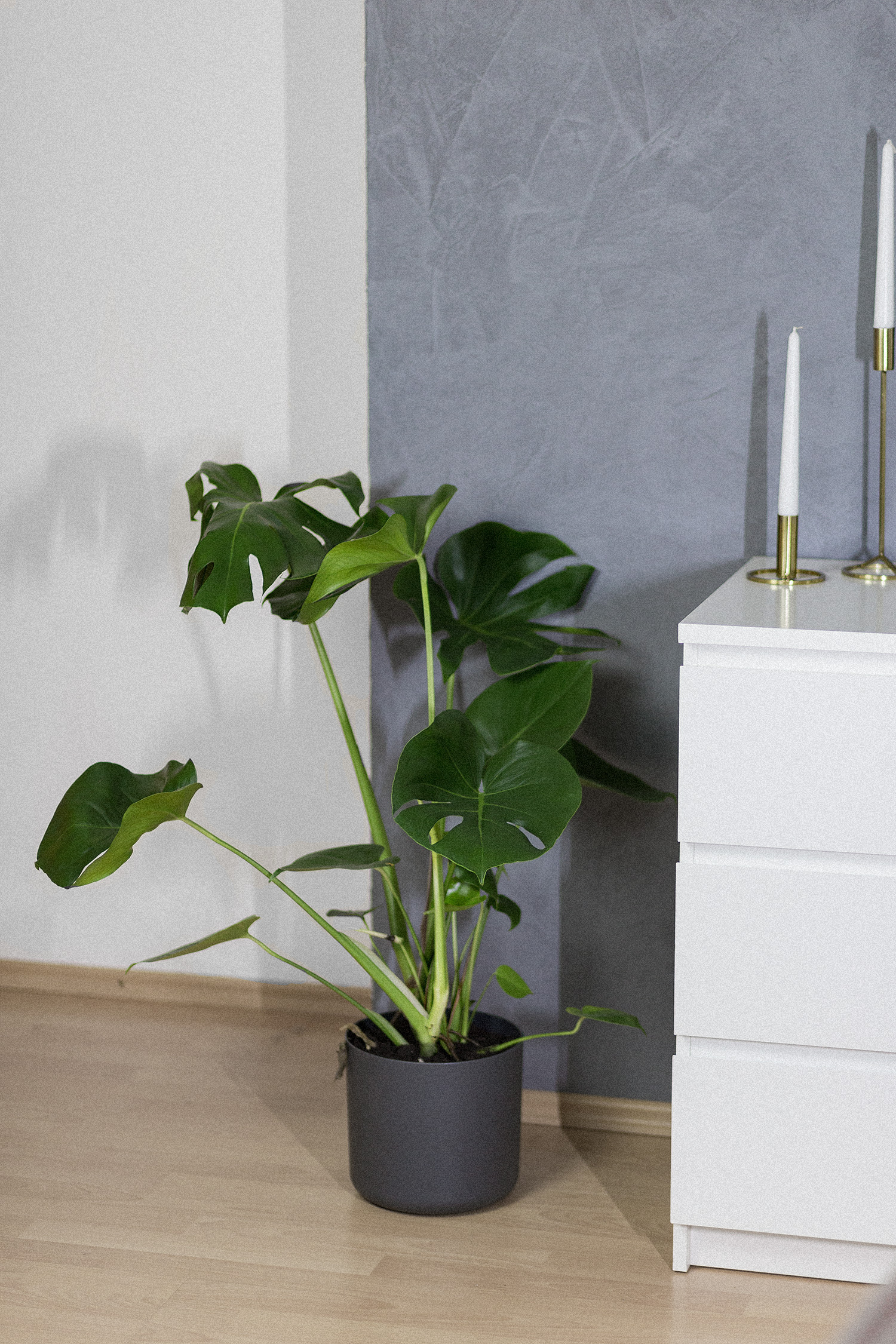 November Favoriten 2017, Monatsrückblick, Monstera Pflanze, bezauberndenana.de